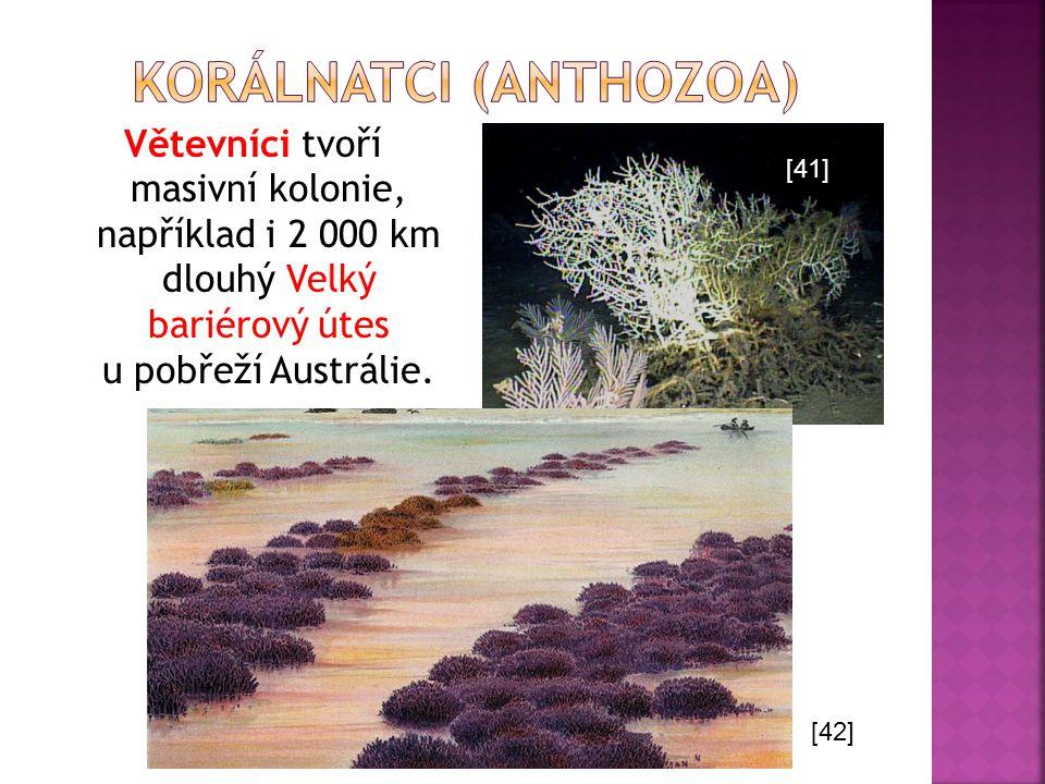 Větevníci tvoří masivní kolonie, například i 2 000 km dlouhý Velký bariérový útes u pobřeží Austrálie. [41] [42]