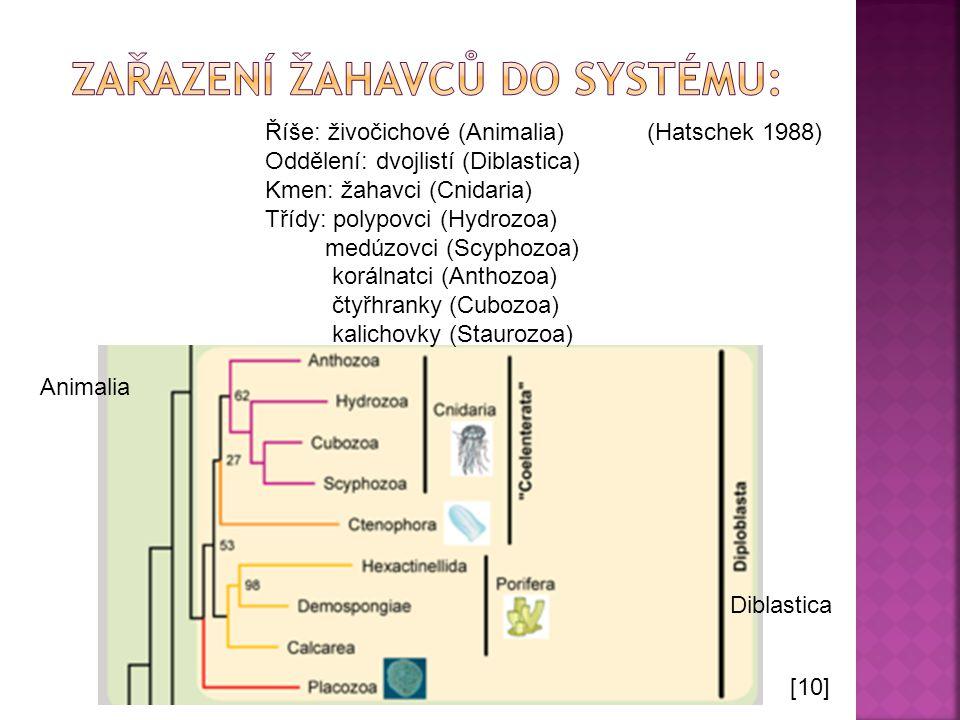 Říše: živočichové (Animalia) Oddělení: dvojlistí (Diblastica) Kmen: žahavci (Cnidaria) Třídy: polypovci (Hydrozoa) medúzovci (Scyphozoa) korálnatci (A