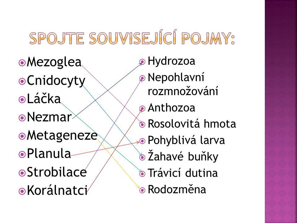  Mezoglea  Cnidocyty  Láčka  Nezmar  Metageneze  Planula  Strobilace  Korálnatci  Hydrozoa  Nepohlavní rozmnožování  Anthozoa  Rosolovitá