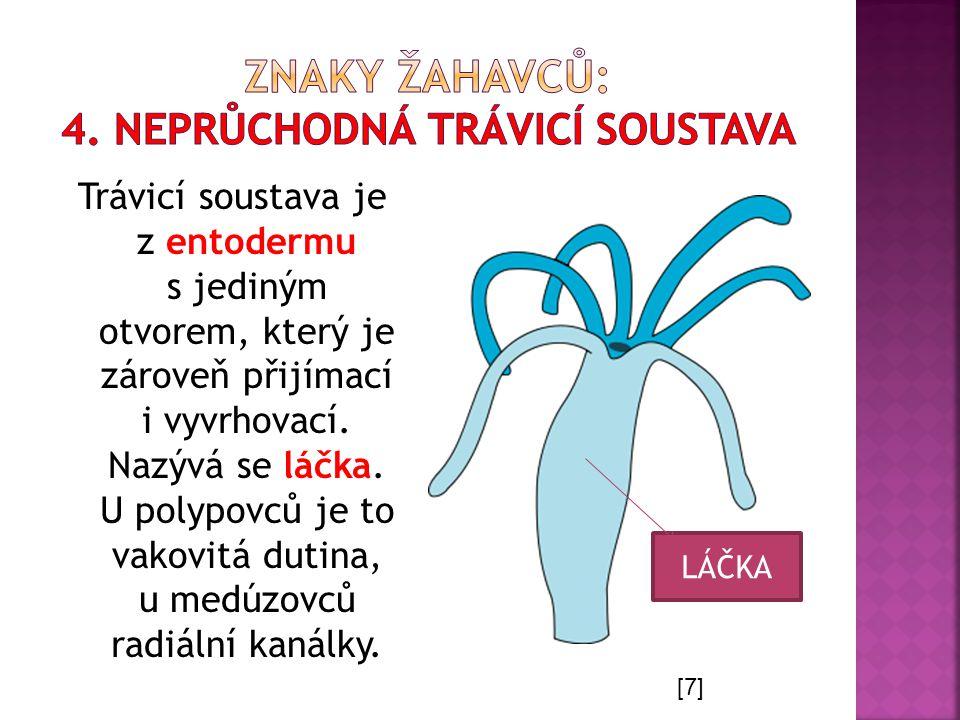 Trávicí soustava je z entodermu s jediným otvorem, který je zároveň přijímací i vyvrhovací. Nazývá se láčka. U polypovců je to vakovitá dutina, u medú