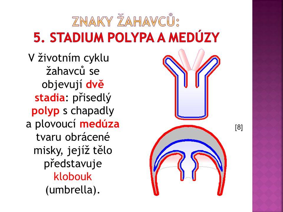V životním cyklu žahavců se objevují dvě stadia: přisedlý polyp s chapadly a plovoucí medúza tvaru obrácené misky, jejíž tělo představuje klobouk (umb