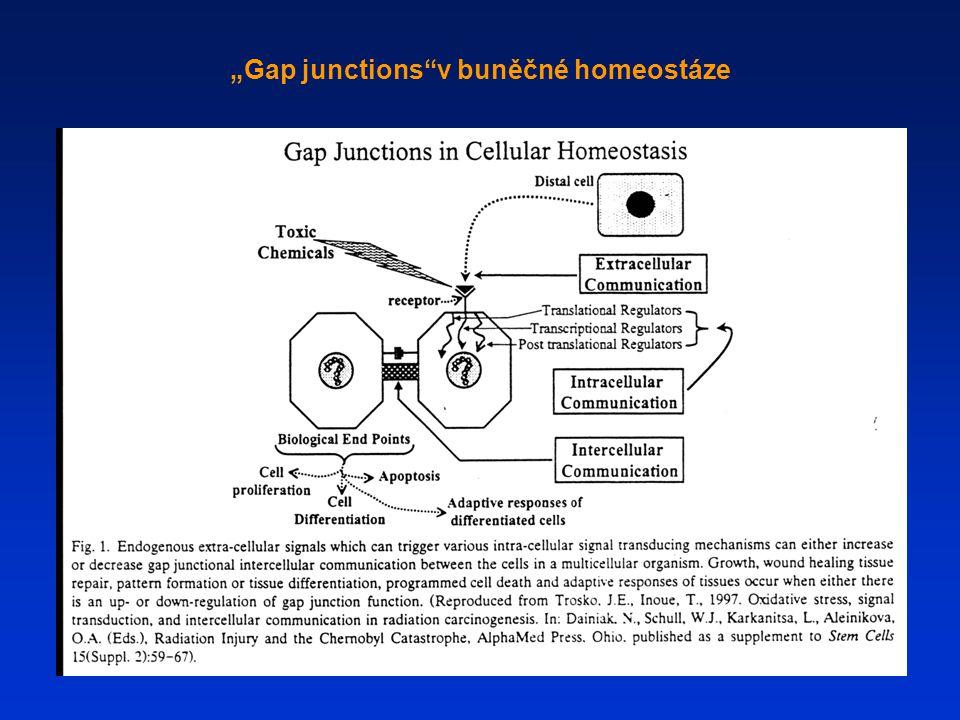 """""""Gap junctions v buněčné homeostáze"""