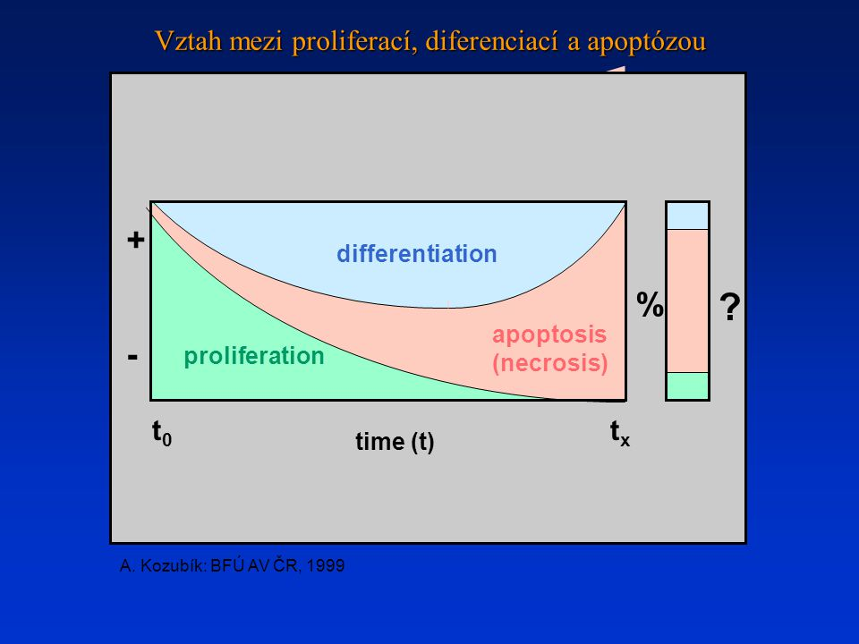% . + - differentiation apoptosis (necrosis) proliferation t0t0 txtx time (t) A.
