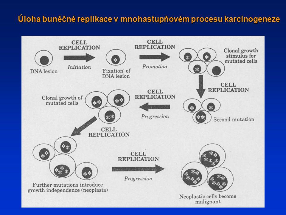 Úloha buněčné replikace v mnohastupňovém procesu karcinogeneze