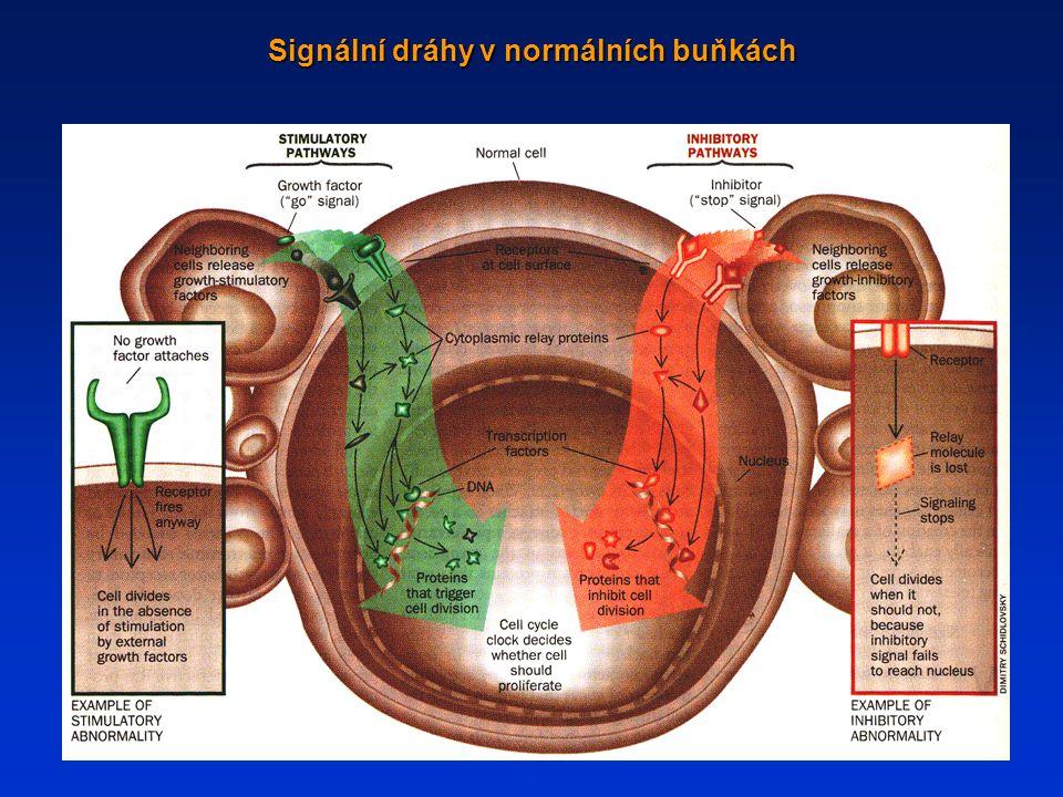 Signální dráhy v normálních buňkách