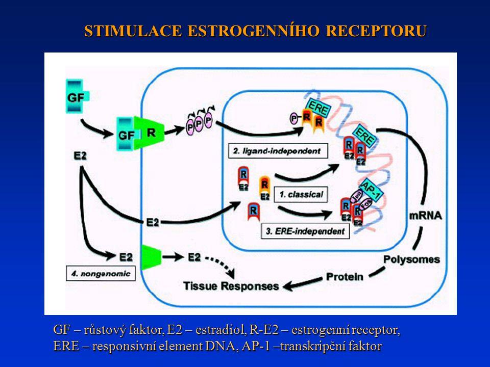 STIMULACE ESTROGENNÍHO RECEPTORU GF – růstový faktor, E2 – estradiol, R-E2 – estrogenní receptor, ERE – responsivní element DNA, AP-1 –transkripční faktor