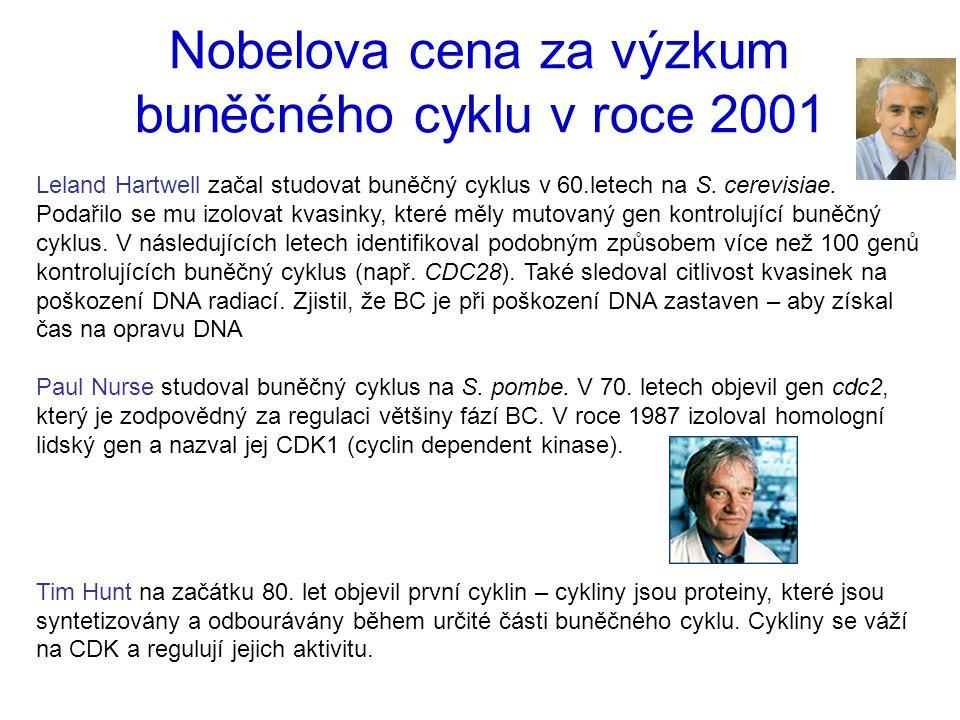 Nobelova cena za výzkum buněčného cyklu v roce 2001 Leland Hartwell začal studovat buněčný cyklus v 60.letech na S. cerevisiae. Podařilo se mu izolova