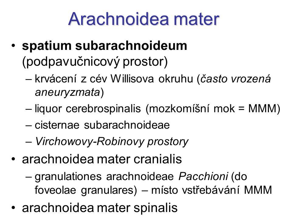 Arachnoidea mater spatium subarachnoideum (podpavučnicový prostor) –krvácení z cév Willisova okruhu (často vrozená aneuryzmata) –liquor cerebrospinalis (mozkomíšní mok = MMM) –cisternae subarachnoideae –Virchowovy-Robinovy prostory arachnoidea mater cranialis –granulationes arachnoideae Pacchioni (do foveolae granulares) – místo vstřebávání MMM arachnoidea mater spinalis