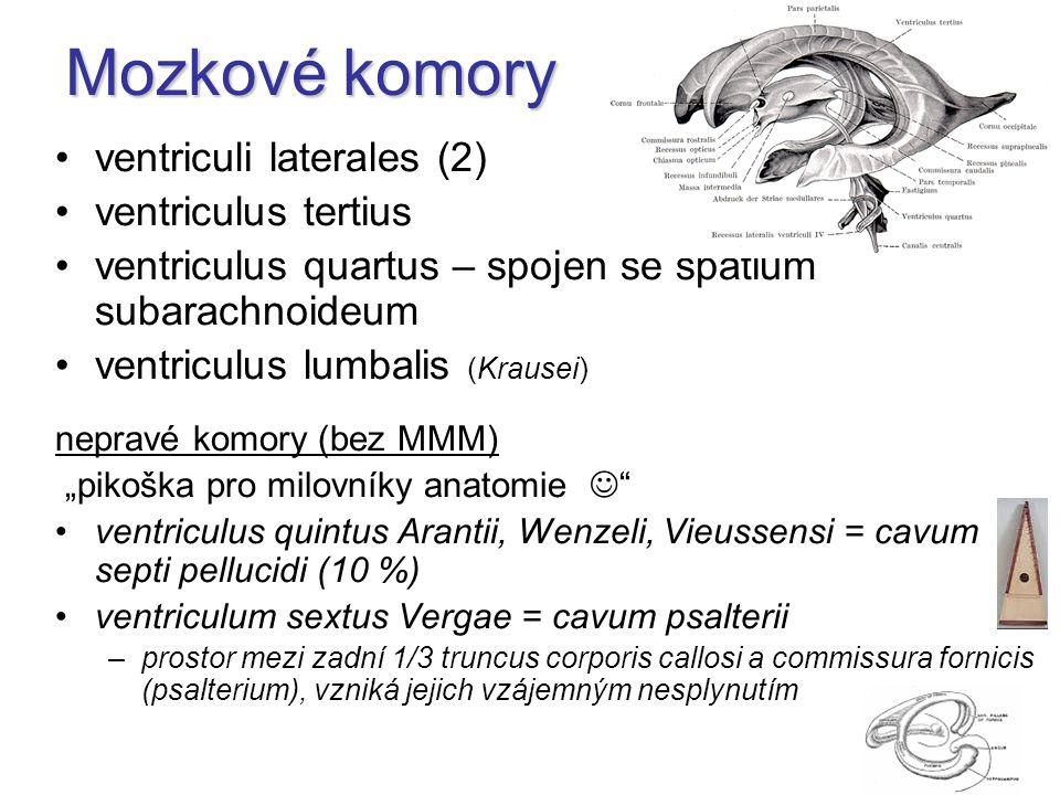 "Mozkové komory ventriculi laterales (2) ventriculus tertius ventriculus quartus – spojen se spatium subarachnoideum ventriculus lumbalis (Krausei) nepravé komory (bez MMM) ""pikoška pro milovníky anatomie ventriculus quintus Arantii, Wenzeli, Vieussensi = cavum septi pellucidi (10 %) ventriculum sextus Vergae = cavum psalterii –prostor mezi zadní 1/3 truncus corporis callosi a commissura fornicis (psalterium), vzniká jejich vzájemným nesplynutím"