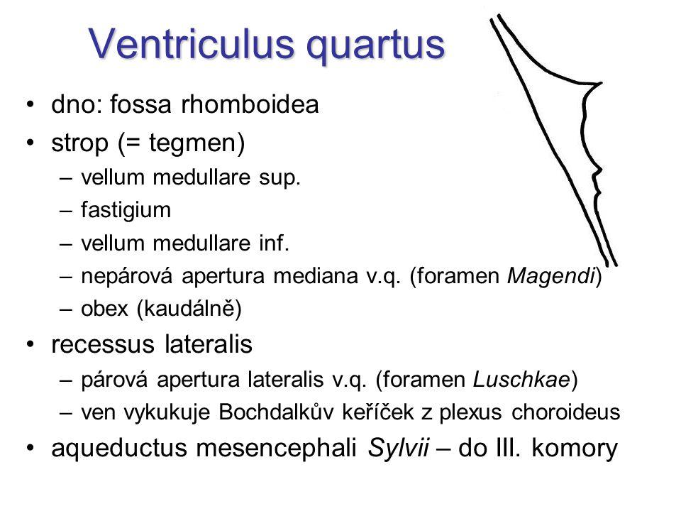 Ventriculus quartus dno: fossa rhomboidea strop (= tegmen) –vellum medullare sup.