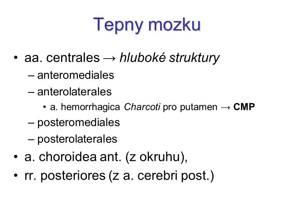 Tepny mozku aa.centrales → hluboké struktury –anteromediales –anterolaterales a.