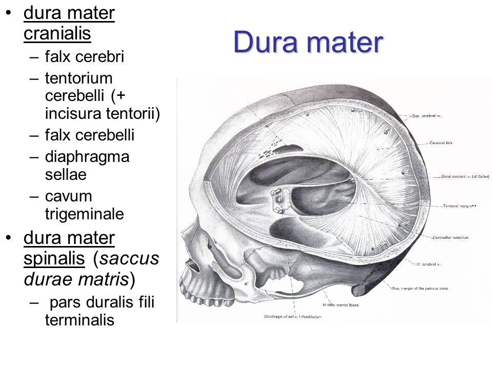 Dura mater dura mater cranialis –falx cerebri –tentorium cerebelli (+ incisura tentorii) –falx cerebelli –diaphragma sellae –cavum trigeminale dura mater spinalis (saccus durae matris) – pars duralis fili terminalis