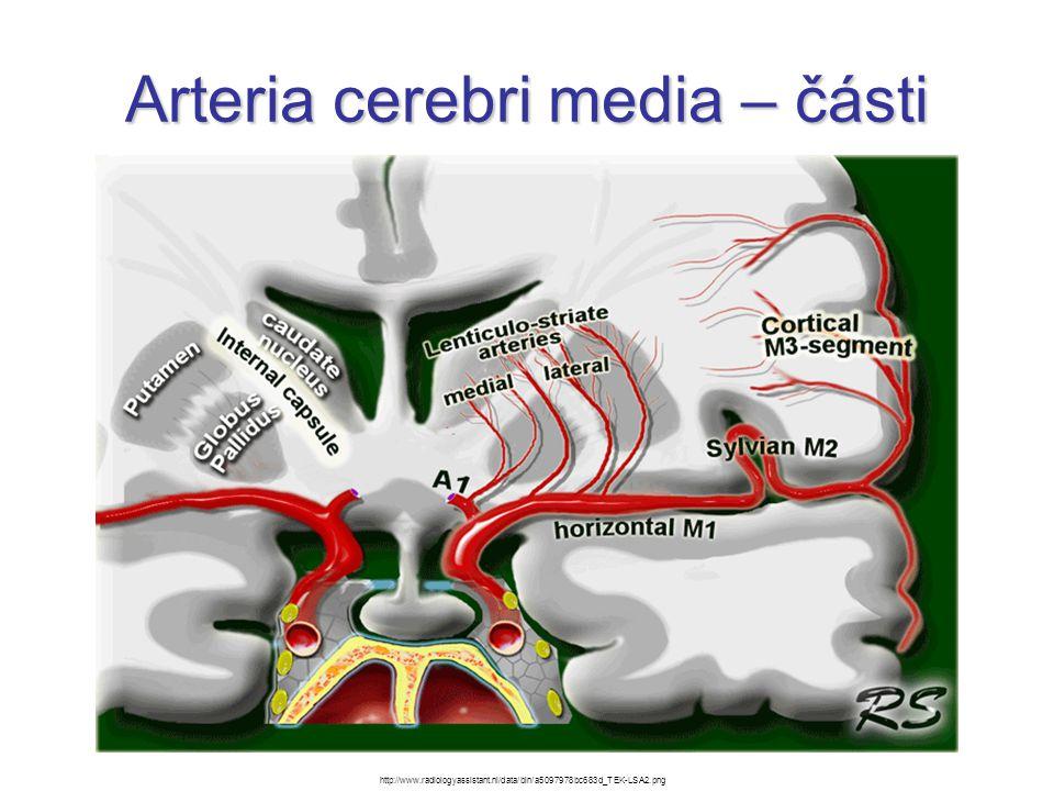 Arteria cerebri media – části http://www.radiologyassistant.nl/data/bin/a5097978bc683d_TEK-LSA2.png
