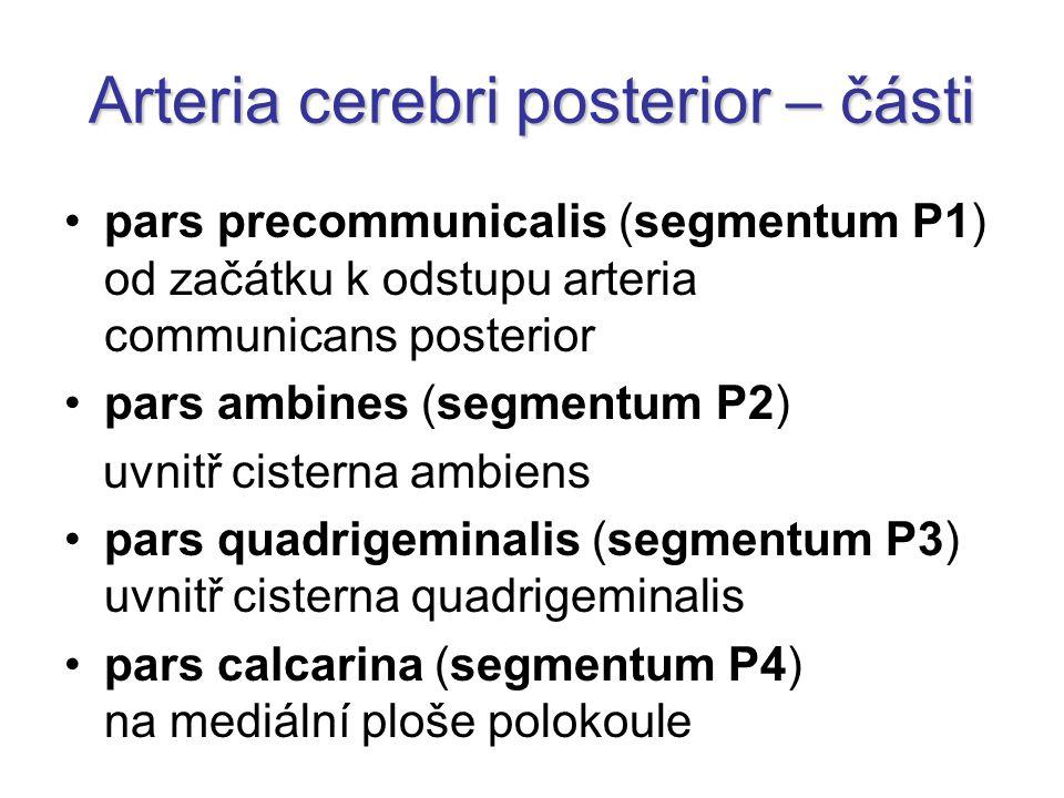 Arteria cerebri posterior – části pars precommunicalis (segmentum P1) od začátku k odstupu arteria communicans posterior pars ambines (segmentum P2) uvnitř cisterna ambiens pars quadrigeminalis (segmentum P3) uvnitř cisterna quadrigeminalis pars calcarina (segmentum P4) na mediální ploše polokoule