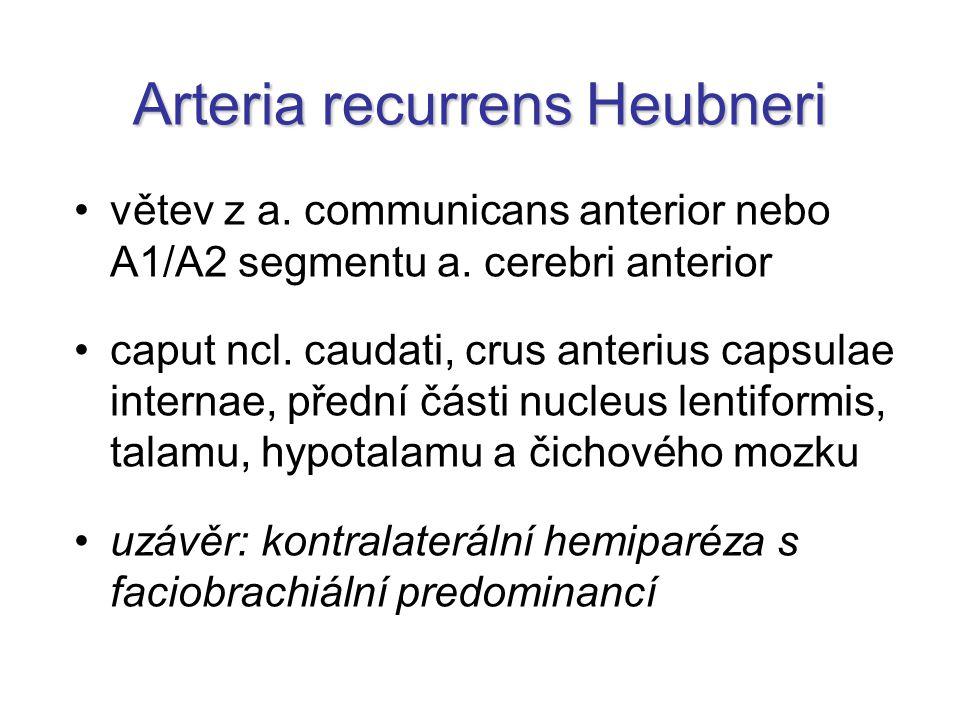 Arteria recurrens Heubneri větev z a.communicans anterior nebo A1/A2 segmentu a.