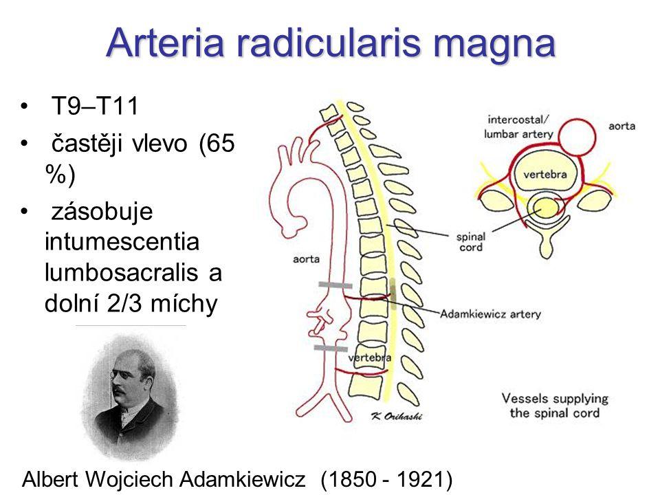 Arteria radicularis magna T9–T11 častěji vlevo (65 %) zásobuje intumescentia lumbosacralis a dolní 2/3 míchy Albert Wojciech Adamkiewicz (1850 - 1921)