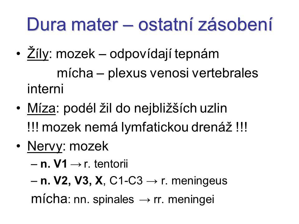 Dura mater – ostatní zásobení Žíly: mozek – odpovídají tepnám mícha – plexus venosi vertebrales interni Míza: podél žil do nejbližších uzlin !!.