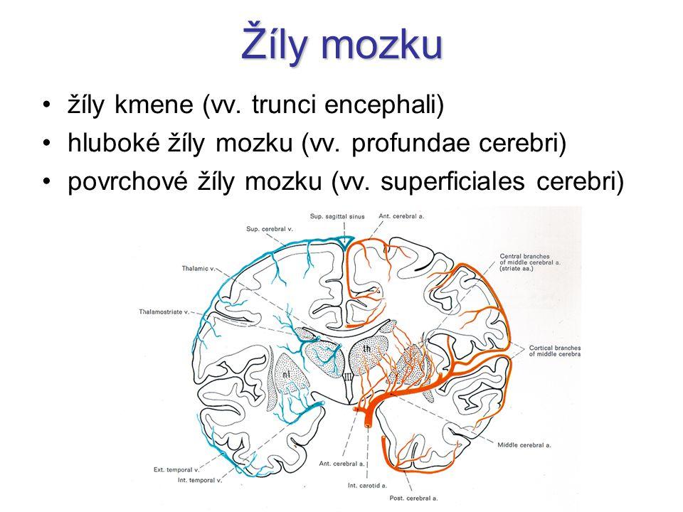 Žíly mozku žíly kmene (vv.trunci encephali) hluboké žíly mozku (vv.