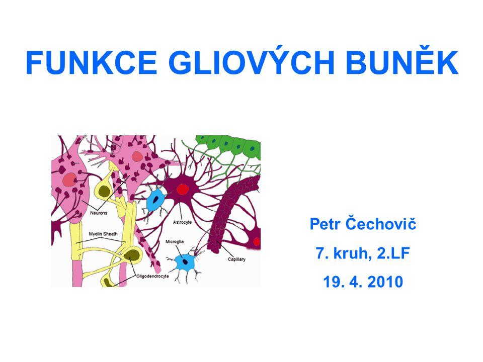 FUNKCE GLIOVÝCH BUNĚK Petr Čechovič 7. kruh, 2.LF 19. 4. 2010