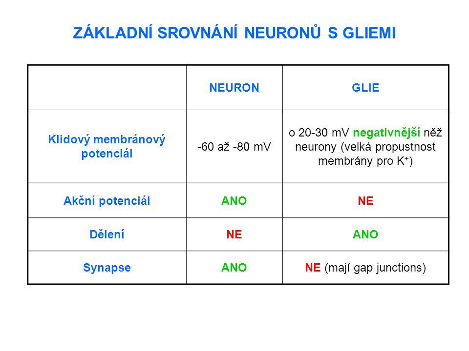 ZÁKLADNÍ SROVNÁNÍ NEURONŮ S GLIEMI NEURONGLIE Klidový membránový potenciál -60 až -80 mV o 20-30 mV negativnější něž neurony (velká propustnost membrá