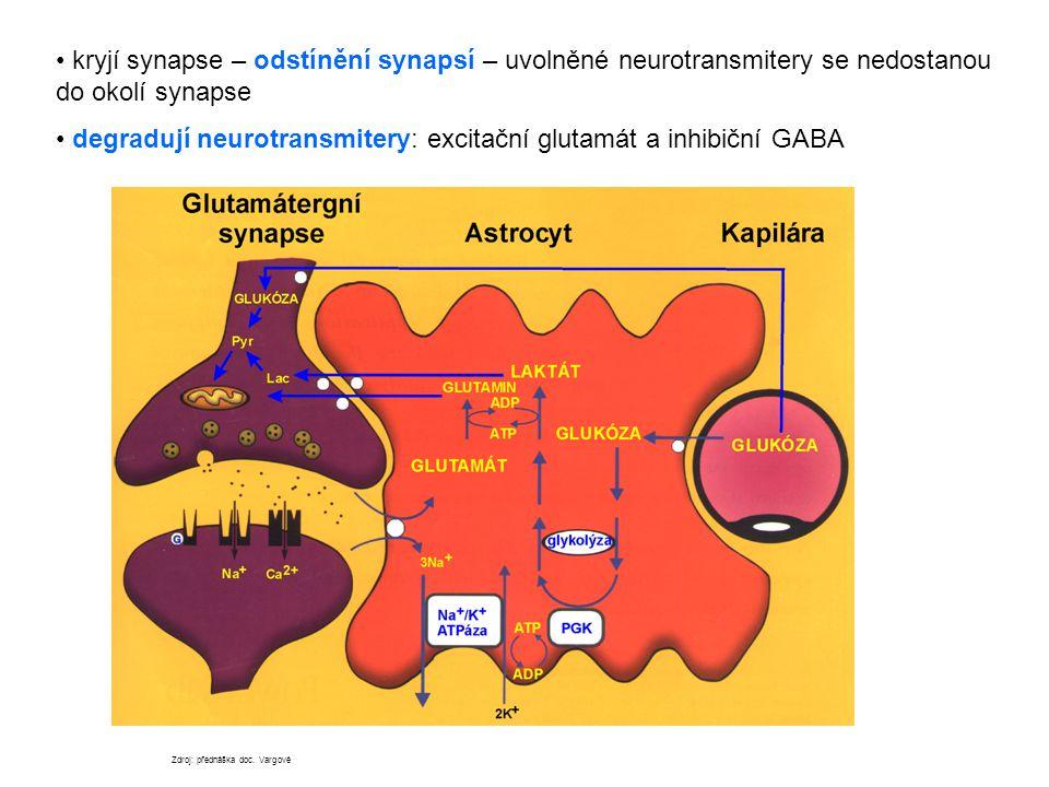 kryjí synapse – odstínění synapsí – uvolněné neurotransmitery se nedostanou do okolí synapse degradují neurotransmitery: excitační glutamát a inhibičn