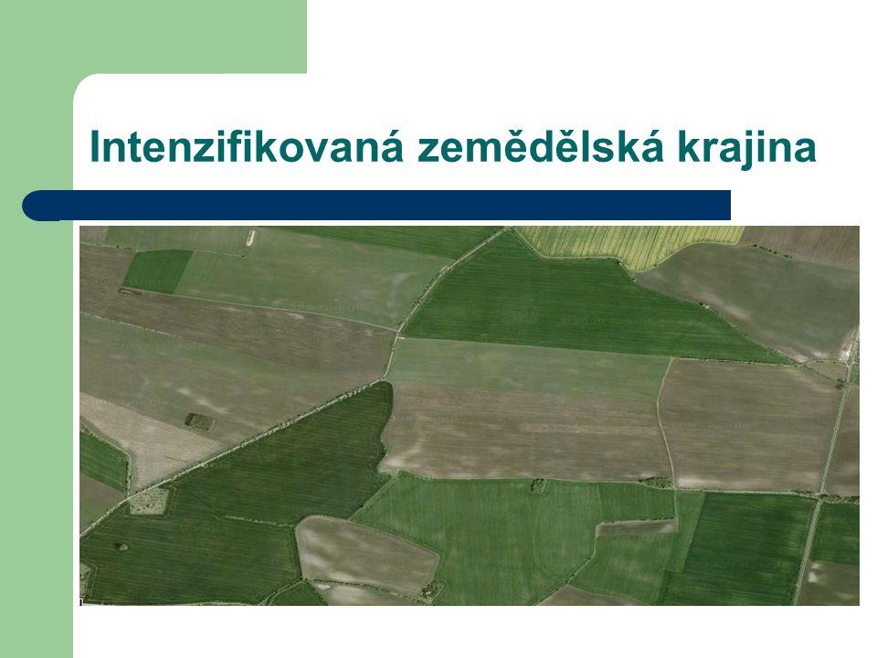 Intenzifikovaná zemědělská krajina