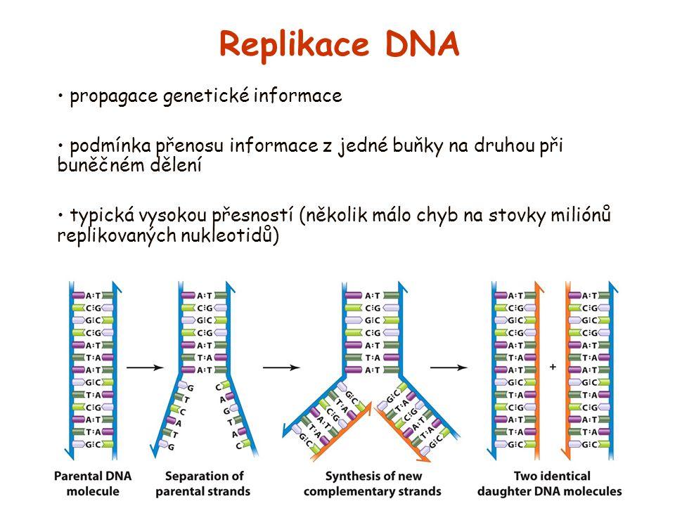 Replikace DNA propagace genetické informace podmínka přenosu informace z jedné buňky na druhou při buněčném dělení typická vysokou přesností (několik