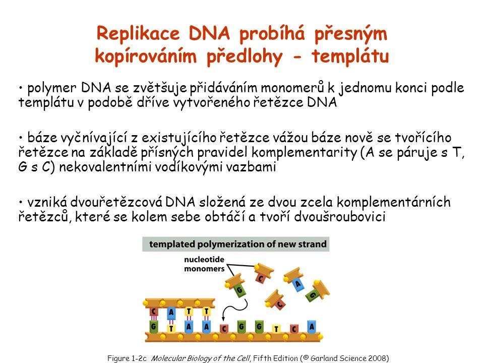 Replikace DNA probíhá přesným kopírováním předlohy - templátu polymer DNA se zvětšuje přidáváním monomerů k jednomu konci podle templátu v podobě dřív