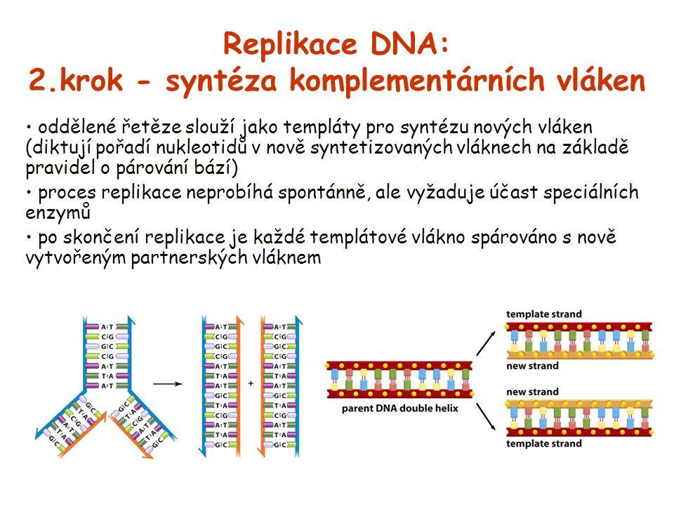 Replikace DNA: 2.krok - syntéza komplementárních vláken oddělené řetěze slouží jako templáty pro syntézu nových vláken (diktují pořadí nukleotidů v no