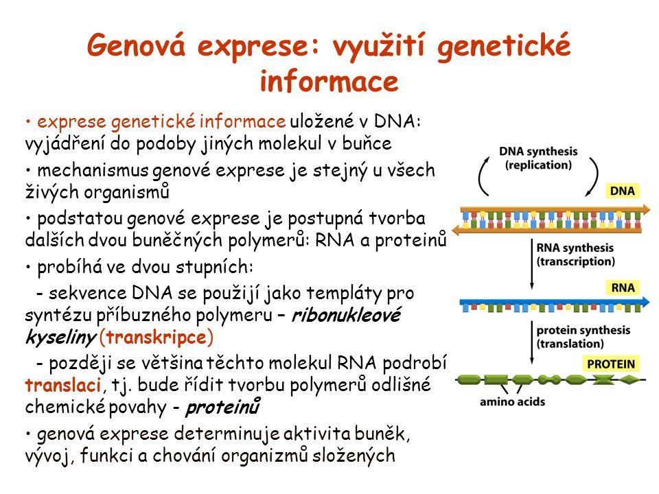 Genová exprese: využití genetické informace exprese genetické informace uložené v DNA: vyjádření do podoby jiných molekul v buňce mechanismus genové e