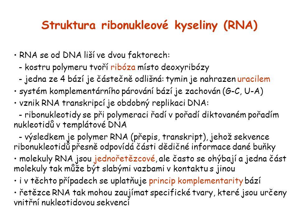 Struktura ribonukleové kyseliny (RNA) RNA se od DNA liší ve dvou faktorech: - kostru polymeru tvoří ribóza místo deoxyribózy - jedna ze 4 bází je část