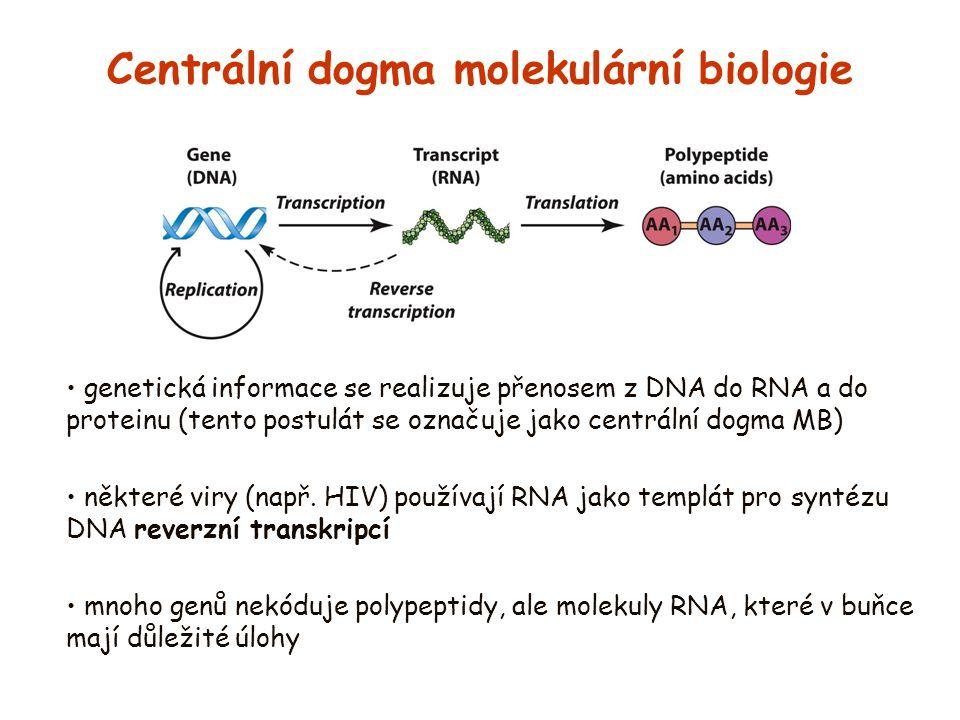 Centrální dogma molekulární biologie genetická informace se realizuje přenosem z DNA do RNA a do proteinu (tento postulát se označuje jako centrální d