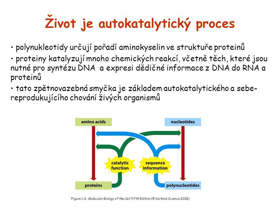 Život je autokatalytický proces polynukleotidy určují pořadí aminokyselin ve struktuře proteinů proteiny katalyzují mnoho chemických reakcí, včetně tě