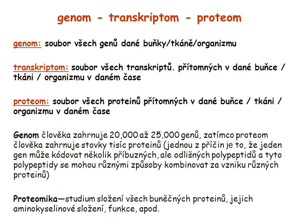 genom - transkriptom - proteom genom: soubor všech genů dané buňky/tkáně/organizmu transkriptom: soubor všech transkriptů. přítomných v dané buňce / t