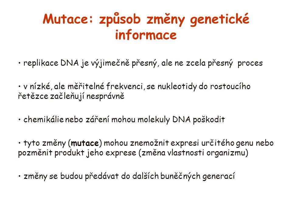 Mutace: způsob změny genetické informace replikace DNA je výjimečně přesný, ale ne zcela přesný proces v nízké, ale měřitelné frekvenci, se nukleotidy