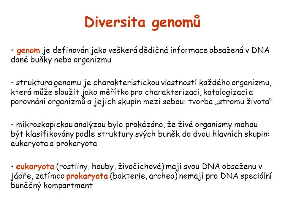 Diversita genomů genom je definován jako veškerá dědičná informace obsažená v DNA dané buňky nebo organizmu struktura genomu je charakteristickou vlas