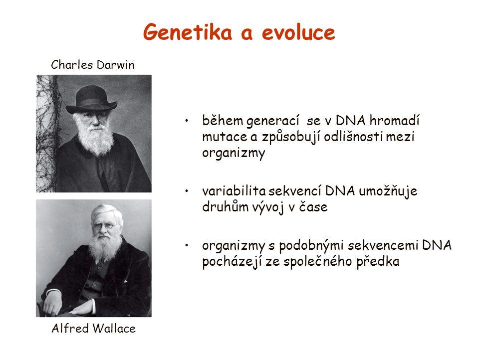 Genetika a evoluce během generací se v DNA hromadí mutace a způsobují odlišnosti mezi organizmy variabilita sekvencí DNA umožňuje druhům vývoj v čase