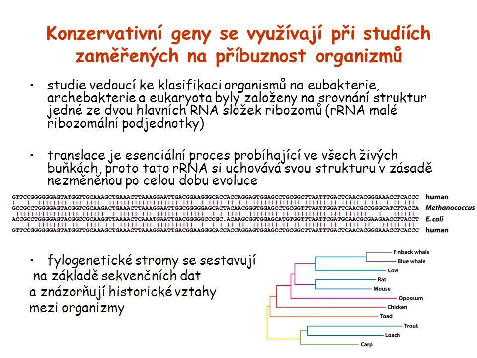 Konzervativní geny se využívají při studiích zaměřených na příbuznost organizmů studie vedoucí ke klasifikaci organismů na eubakterie, archebakterie a