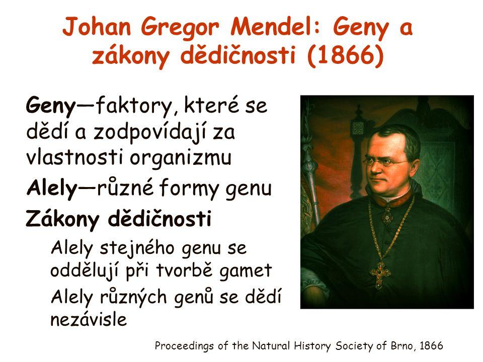 Johan Gregor Mendel: Geny a zákony dědičnosti (1866) Geny—faktory, které se dědí a zodpovídají za vlastnosti organizmu Alely—různé formy genu Zákony d