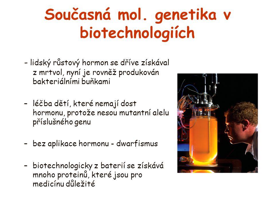 Současná mol. genetika v biotechnologiích - lidský růstový hormon se dříve získával z mrtvol, nyní je rovněž produkován bakteriálními buňkami –léčba d