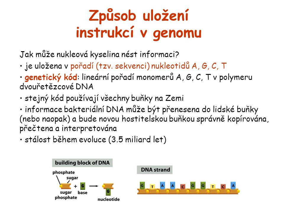 Způsob uložení instrukcí v genomu Jak může nukleová kyselina nést informaci? je uložena v pořadí (tzv. sekvenci) nukleotidů A, G, C, T genetický kód: