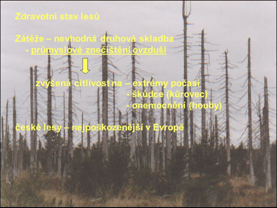 Zdravotní stav lesů Zátěže – nevhodná druhová skladba - průmyslové znečištění ovzduší zvýšená citlivost na – extrémy počasí - škůdce (kůrovec) - onemo