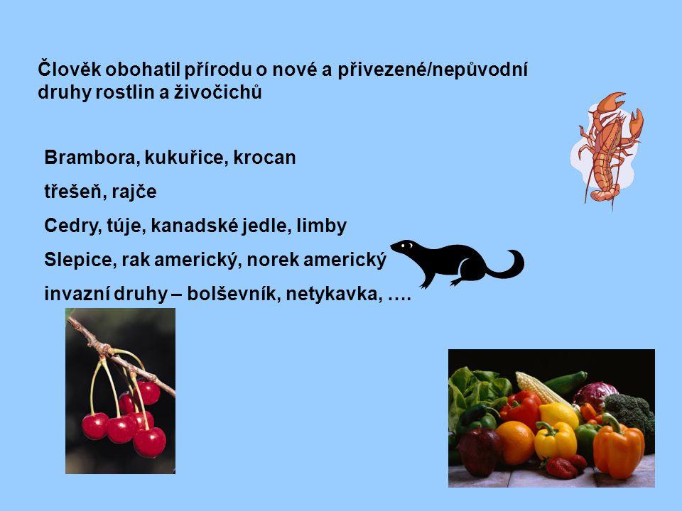 Člověk obohatil přírodu o nové a přivezené/nepůvodní druhy rostlin a živočichů Brambora, kukuřice, krocan třešeň, rajče Cedry, túje, kanadské jedle, l