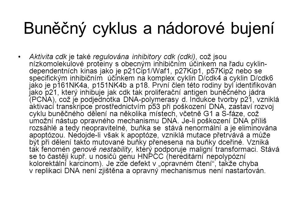 Buněčný cyklus a nádorové bujení Aktivita cdk je také regulována inhibitory cdk (cdki), což jsou nízkomolekulové proteiny s obecným inhibičním účinkem
