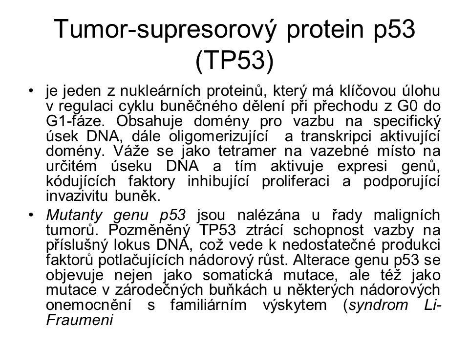 Tumor-supresorový protein p53 (TP53) je jeden z nukleárních proteinů, který má klíčovou úlohu v regulaci cyklu buněčného dělení při přechodu z G0 do G