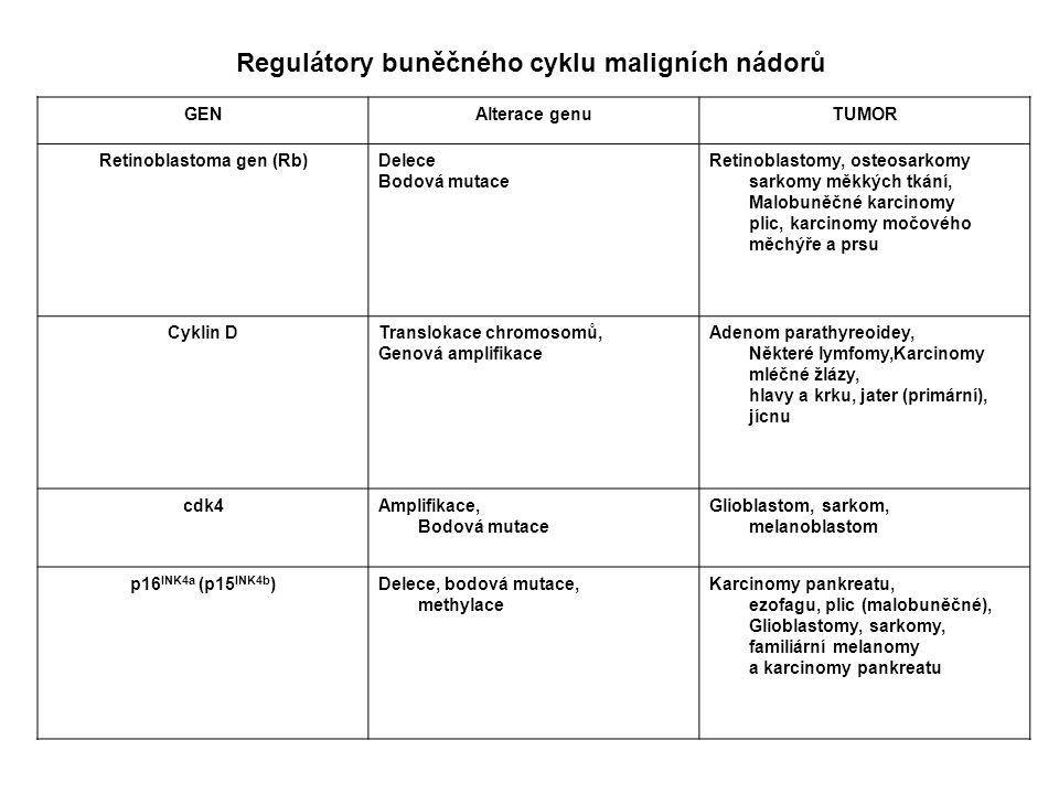 GENAlterace genuTUMOR Retinoblastoma gen (Rb)Delece Bodová mutace Retinoblastomy, osteosarkomy sarkomy měkkých tkání, Malobuněčné karcinomy plic, karc