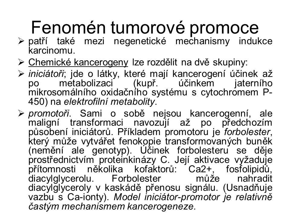 Fenomén tumorové promoce  patří také mezi negenetické mechanismy indukce karcinomu.  Chemické kancerogeny lze rozdělit na dvě skupiny:  iniciátoři;