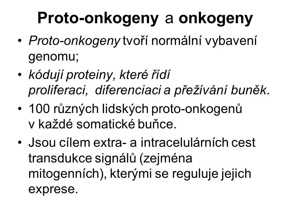 Proto-onkogeny a onkogeny Proto-onkogeny tvoří normální vybavení genomu; kódují proteiny, které řídí proliferaci, diferenciaci a přežívání buněk. 100