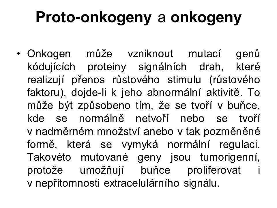Proto-onkogeny a onkogeny Onkogen může vzniknout mutací genů kódujících proteiny signálních drah, které realizují přenos růstového stimulu (růstového
