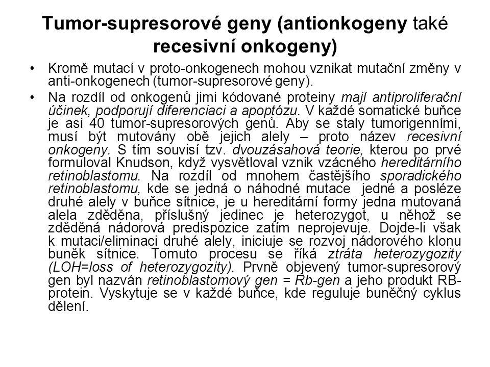 Tumor-supresorové geny (antionkogeny také recesivní onkogeny) Kromě mutací v proto-onkogenech mohou vznikat mutační změny v anti-onkogenech (tumor-sup